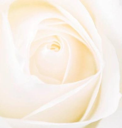 White Rose: Some creative macro photography of one of my favourite subject matter's, flowers.